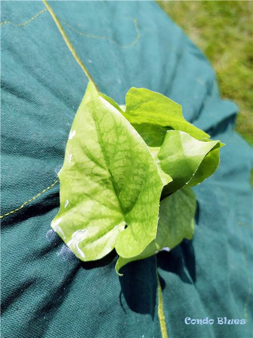 DIY ivy umbrella