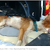 Em Caicó, cachorro é encontrado em meio ao lixo dentro de sacola em terreno baldio no interior do RN.