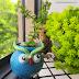 How to Grow Jade plant in Matka (Earthen pot)  - Easy DIY Home decor