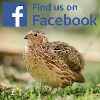 www.facebook.com/Siltajoensirkus