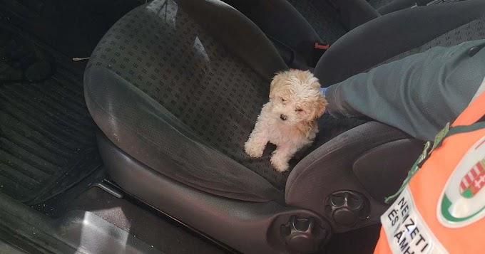 Életveszélyben lévő kiskutyákat mentettek a pénzügyőrök az autópályán