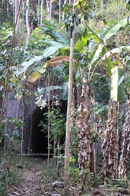 Jalur kereta rute Kalipucang Pangandaran yang sudah menjadi hutan rakyat