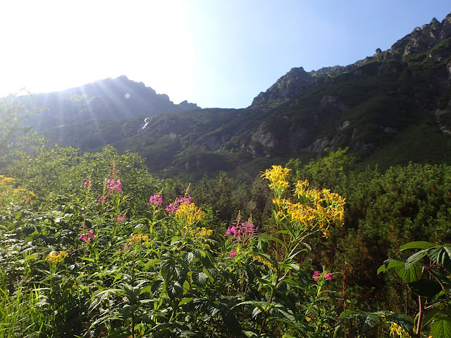 Szlak do Piątki oferuje sporo zielska ;)