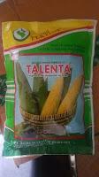 manfaat jagung manis, talenta, benih pertiwi, budidaya jagung manis, jual benih jagung, toko pertanian, toko online, lmga agro