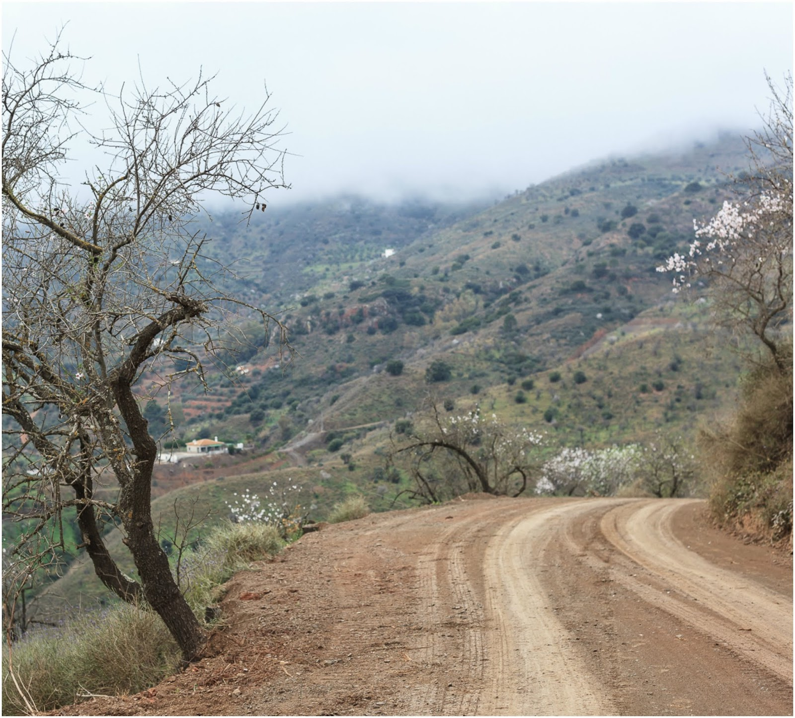 Almond tree hiking route