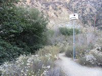 Riparian section on Fish Canyon access trail in Vulcan Materials' Azusa Rock quarry