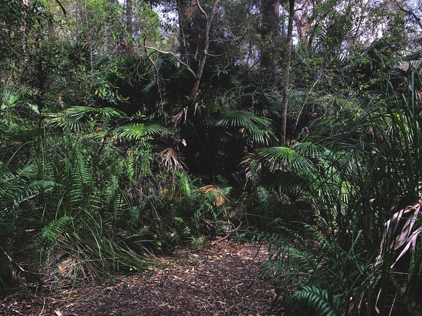 Bicenntenial Walk na Bribie Island - zdjęcie lasu i krzewów