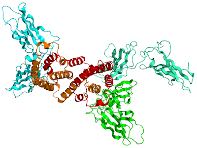 IFN-γ receptor
