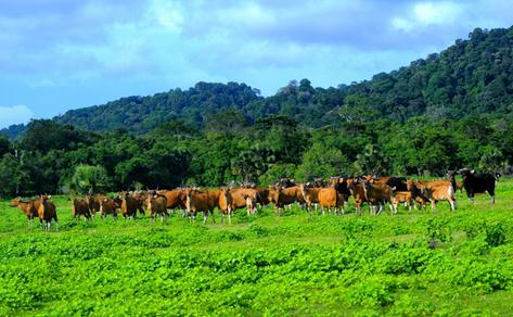 Objek Alam Padang Rumput Sadengan Banyuwangi