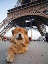 cães em paris