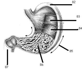 GCSE Biology Worksheets: Digestive System Worksheet