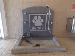lavando patas dos cães