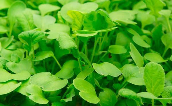 vegetales-organicos