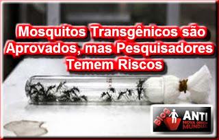 Resultado de imagem para Alexandre Padilha fábrica de mosquitos oxitec