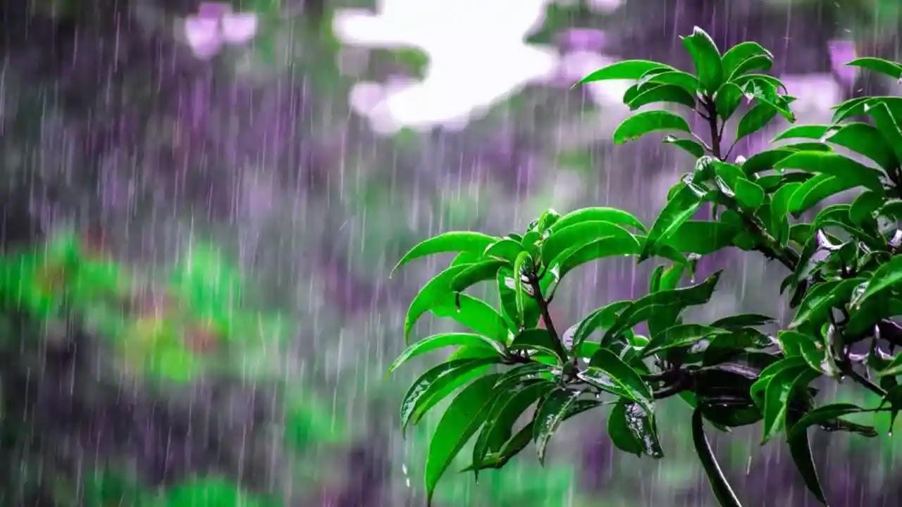 Monsoon Health Tips | HealthInsta