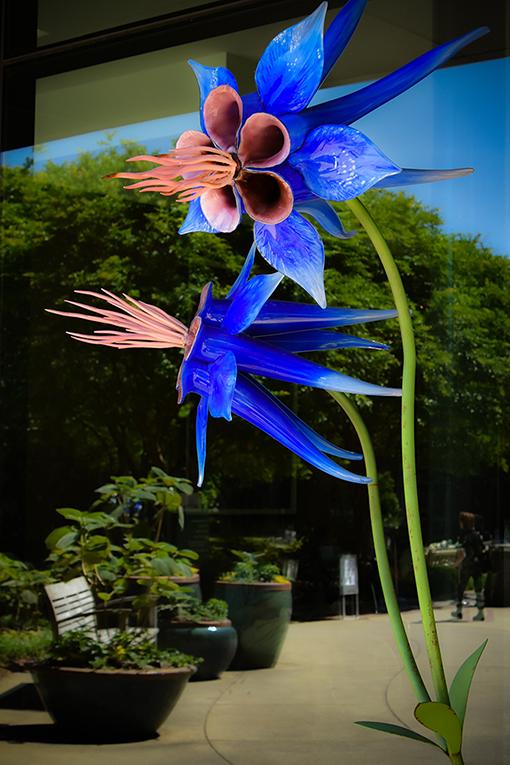 SUPERnatural | Atlanta Botanical Garden | Photo by Travis Swann Taylor
