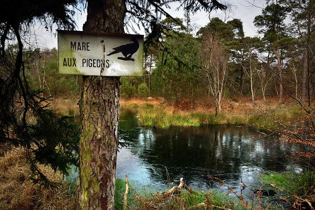 Mare aux Pigeons, Gorges de Franchard, Fontainebleau.