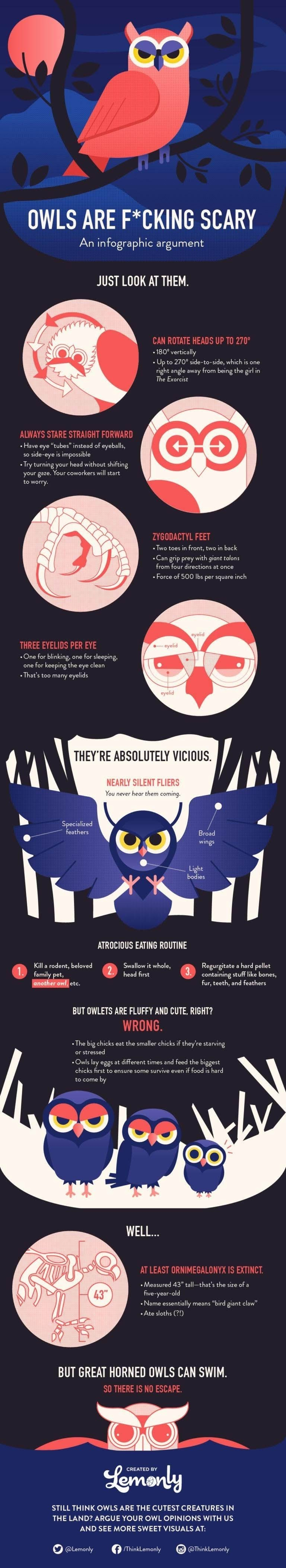 OWLS are a frightening argument #infographic
