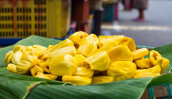What are the benefits of jackfruit or jacuera?