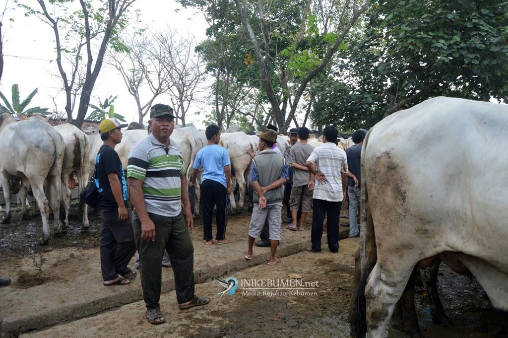 Penting! Warga Kebumen Diimbau Tak Menyembelih Hewan Kurban Dekat Hewan Kurban Lainnya