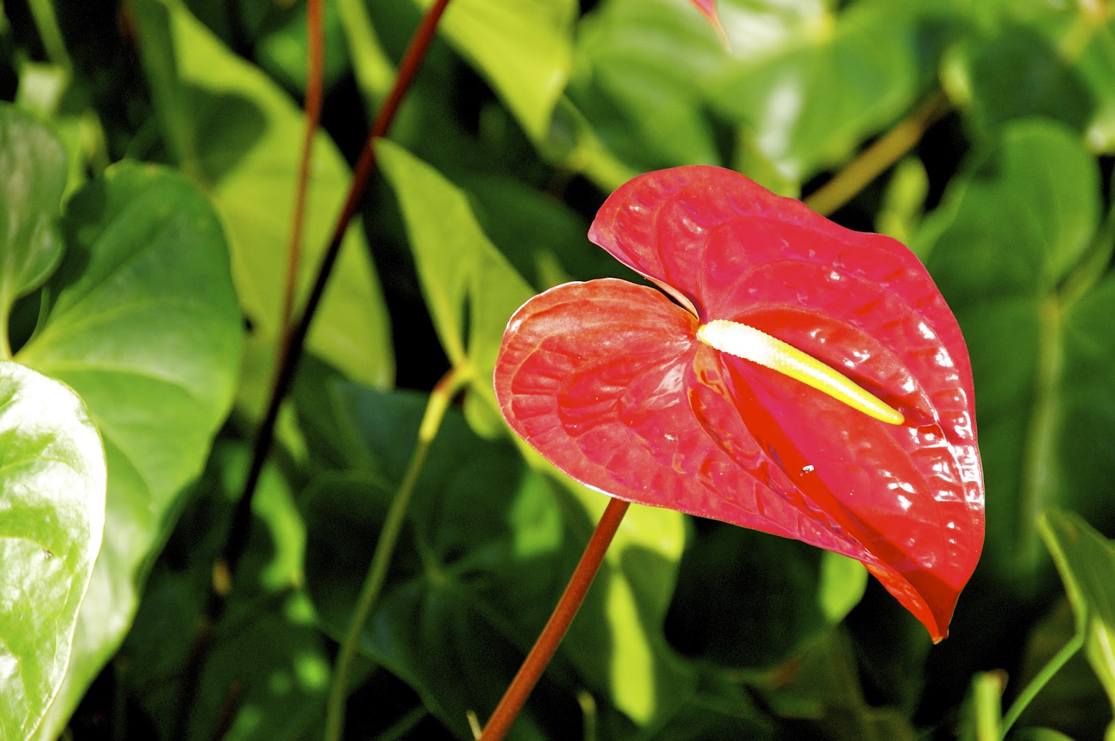 Loop Barbados: The flower of Love (or should be at least ...