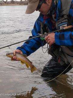 Satoshi Yamamoto, Bighorn River, brown trout
