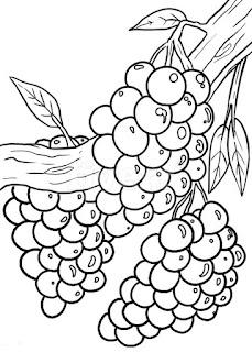 mewarnai buah anggur