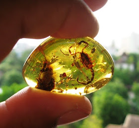 Pictures Types Of Amber