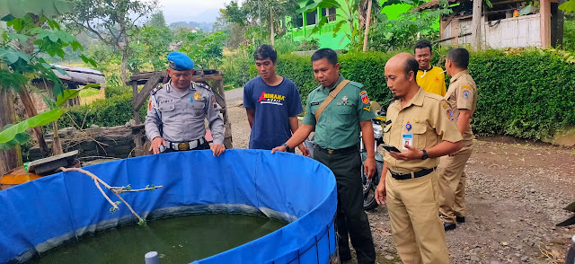 KodimKaranganyar - Sintegritas Babinsa, Bhabinkamtibmas dan Perangkat Desa Pantau Budidaya Ikan Lele