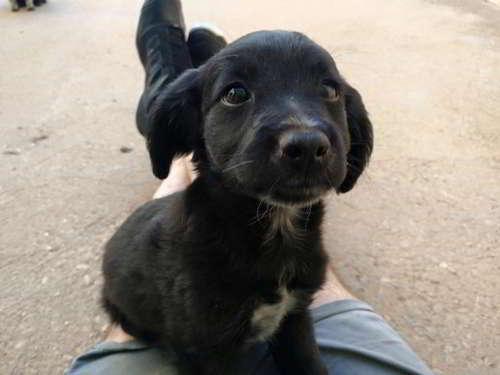 cachorros talla pequena 6