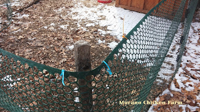 covered chicken run netting hawks