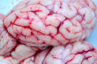 лечение алкоголизма мозговой тканью