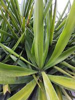 لتعديلات الوراثية على النباتات/وأثرها على الأمن الغذائي