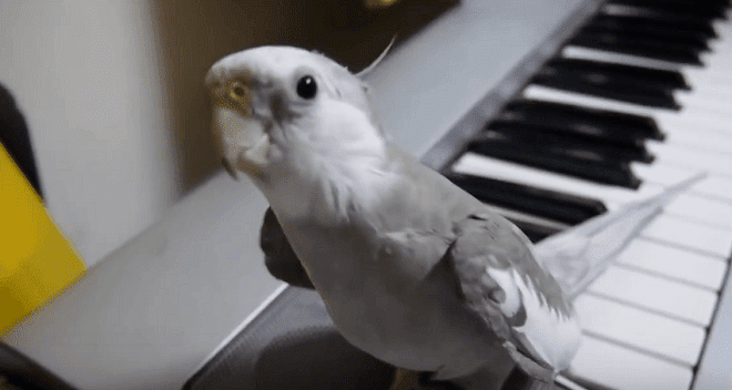 This Guy Filmed His Bird's Adorable Nightly Ritual