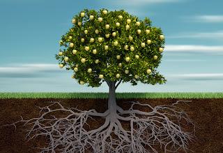 The Needle Tree - Serambi Catatan