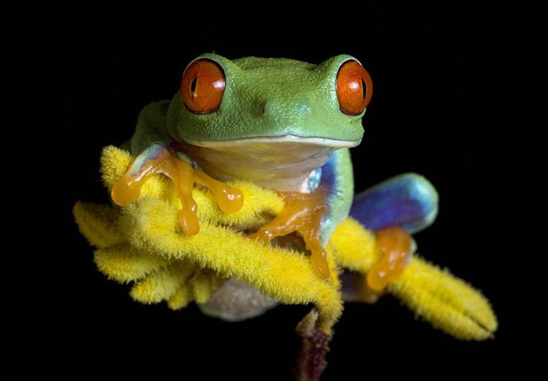 V Frog Kpm Hidden Unseen: ...