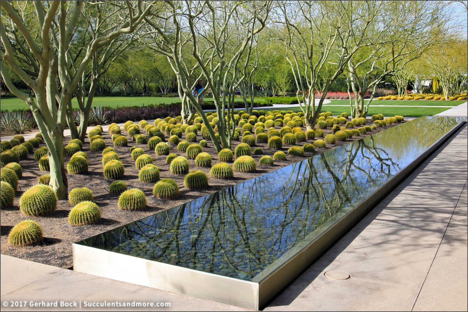 Succulents And More Sunnylands Bedazzles With Mass Plantings Of Succulents