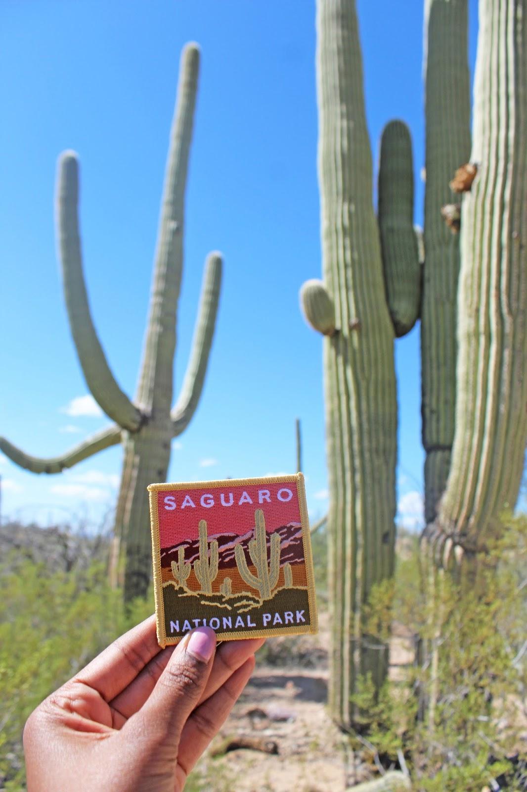 saguaro national park 2
