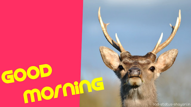 good morning images reindeer