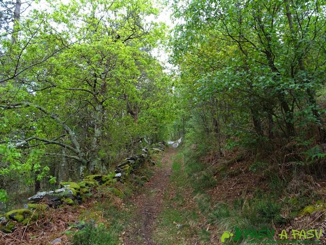 Ruta de los Castros: Senda entre el bosque