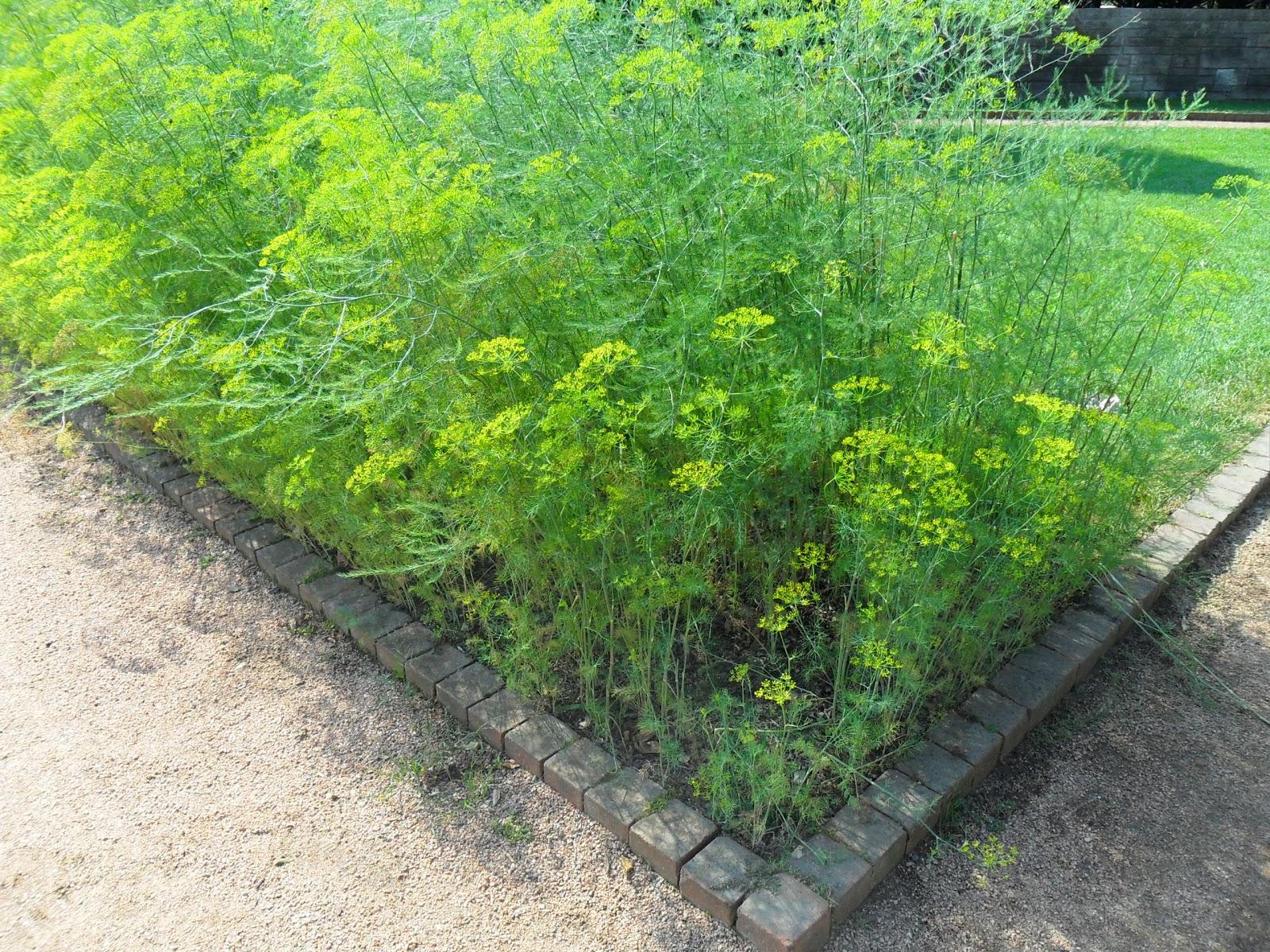 Backyard Patch Herbal Blog