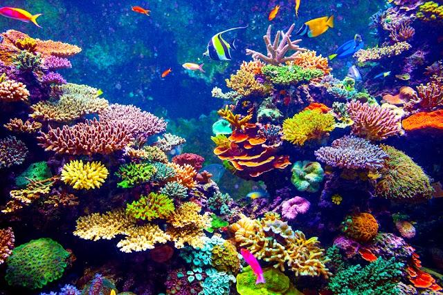 Bilim adamları mercanlar için bir stres testi geliştirdi: okyanusları kurtarmaya yardımcı olacak