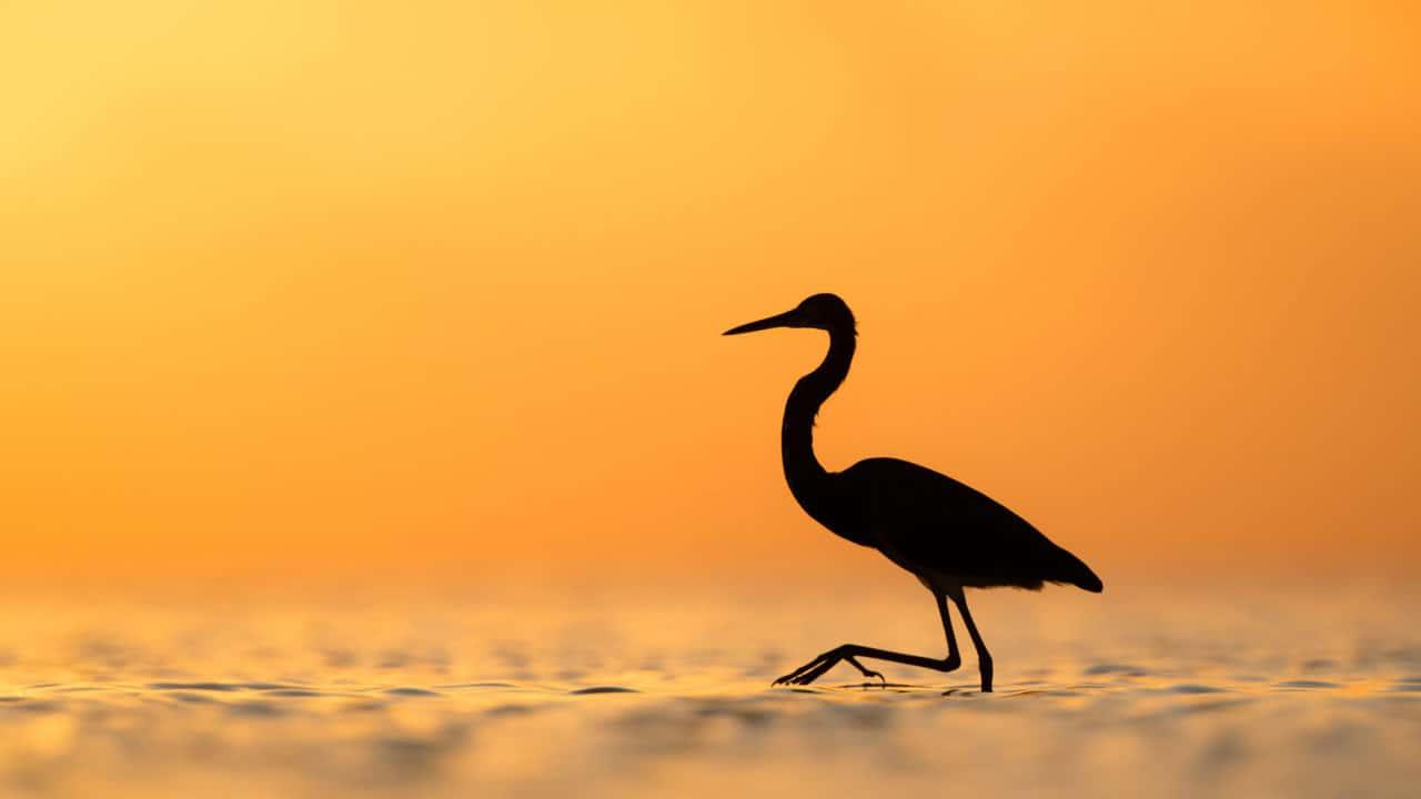 क्रौंच - मराठी कविता | Kraunch - Crane - Marathi Kavita