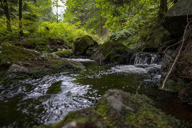 Drei-Täler-Tour und Stadtrundgang Bad Harzburg  Wandern im Harz  Eckerstausee - Radauwasserfall 13