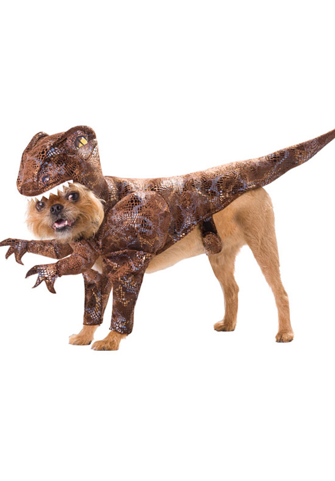 Dog Costume Collection ~ Funny Joke Pictures