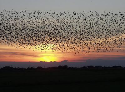 Amalan-Amalan Untuk Menarik Burung Walet