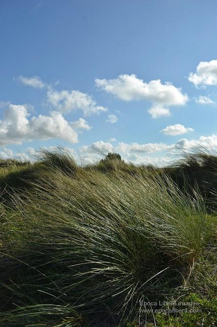 Landscape in Dunes of Texel National Park.