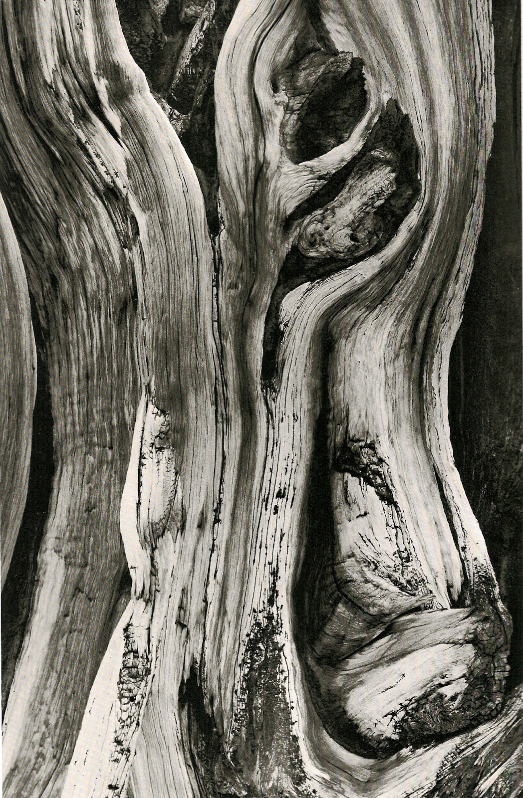 GC Photography: Minor White: Abstract b&w still life