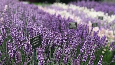 Plantas, flores y complementos de jardín en Hampton Court Palace Garden Festival 2019