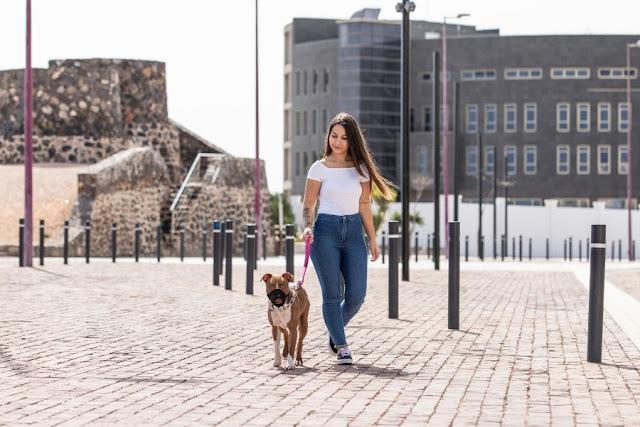 PASEO%2BCON%2BPERROS%2B3 - Fuerteventura.- Ayuntamiento de Puerto del Rosario  proyecta   campaña de concienciación animal de manera integral